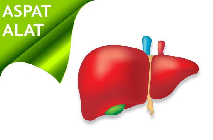 Transaminazy wątroby ASPAT i ALAT