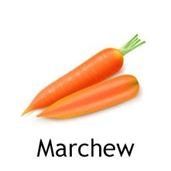 Marchew najesień